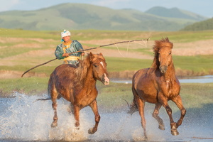 CHEVAUX EN MONGOLIE CHINOISE