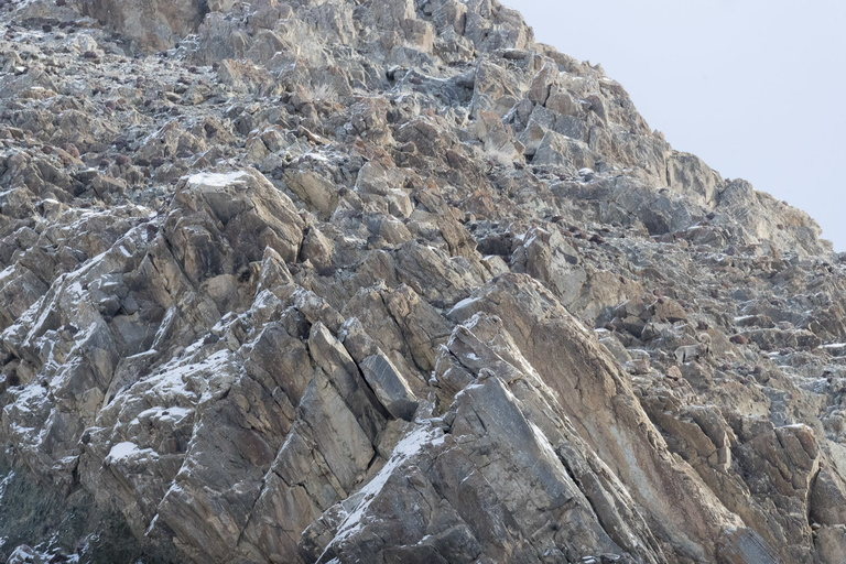 2019 02 SNOW LEOPARD WEST MONGOLIA-2684.jpg