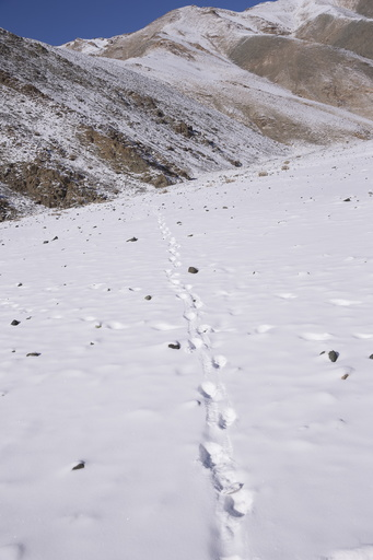 2019 02 SNOW LEOPARD WEST MONGOLIA-4132.jpg